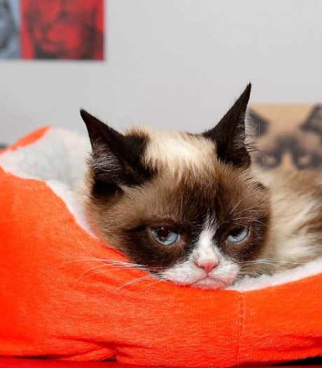 We dénken onze katten te kennen, maar dat valt vies tegen