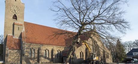 De rode beuk in Haaksbergengaat tegen de vlakte, na meer dan 80 jaar. En vernielt een oud muurtje...