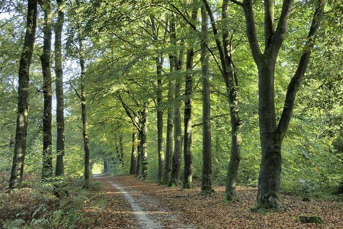 Het Bergherbos in Beek.