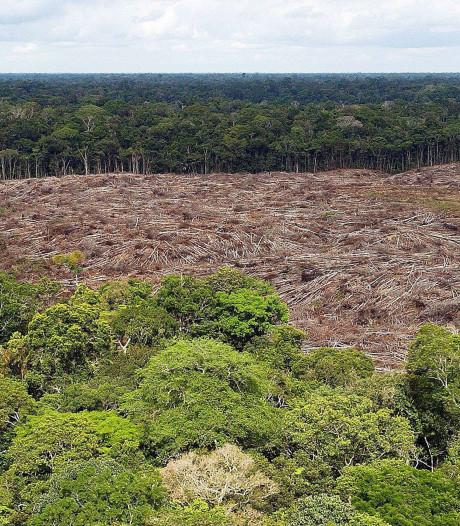 """La déforestation est la """"cause principale"""" des incendies en Amazonie"""