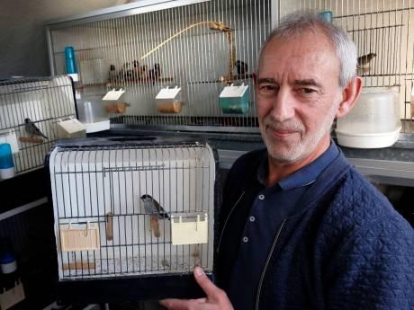 Bram heeft 200 prachtvinken: 'Ik zit gerust anderhalf uur in de auto voor een mooi vogeltje'
