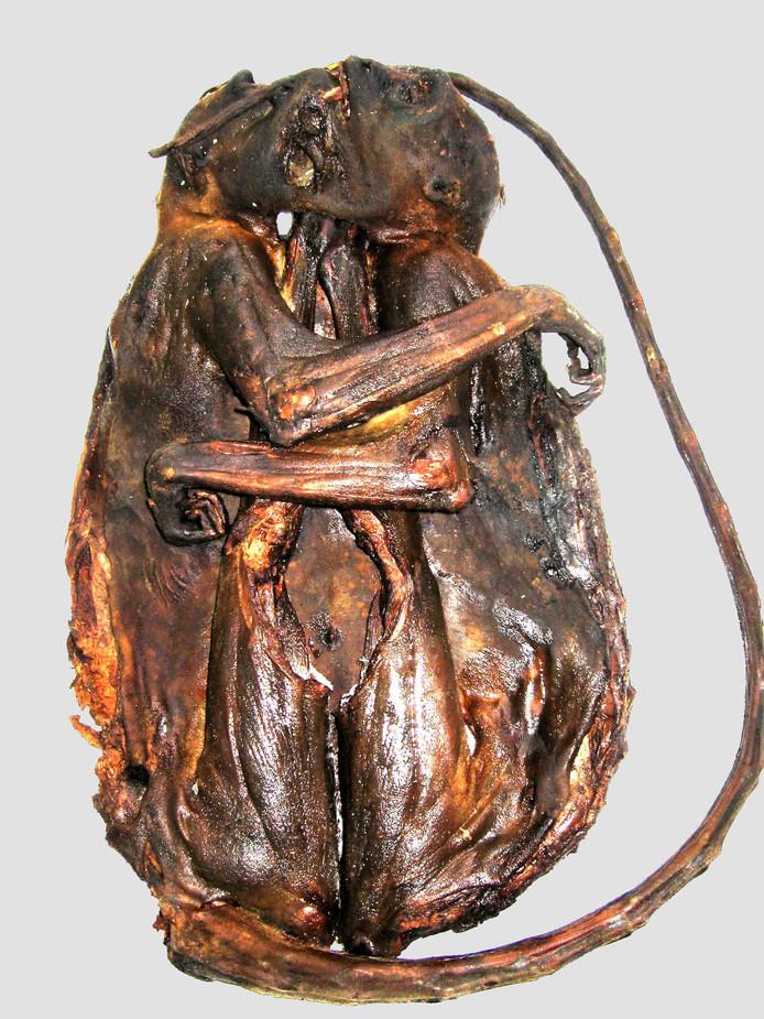 Deze gerookte apen werden jaren geleden aangetroffen in een transport van Afrika naar Parijs. Het verboden vlees is daar nog steeds verkrijgbaar.