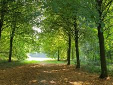 Altijd al een eigen bos willen hebben? In de Achterhoek staat er straks één te koop
