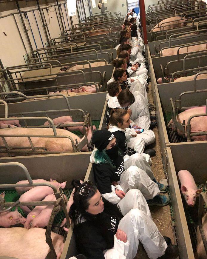 Een foto van tientallen actievoerders in Boxtel, gemaakt door een actievoerder zelf. Ze zitten tussen de hokken.