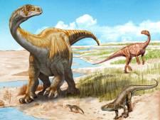 Utrechtse onderzoekers vinden nieuwe dinosoort, een voorloper van de langnekdino