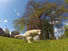Alle hondenbezitters Harderwijk krijgen houder voor poepzakken