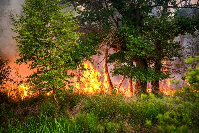 De brand op de Deurnsche Peel is opnieuw opgelaaid.