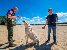 Honden aanlijnen en natuur afsluiten om flora en fauna op Kootwijkerzand te beschermen