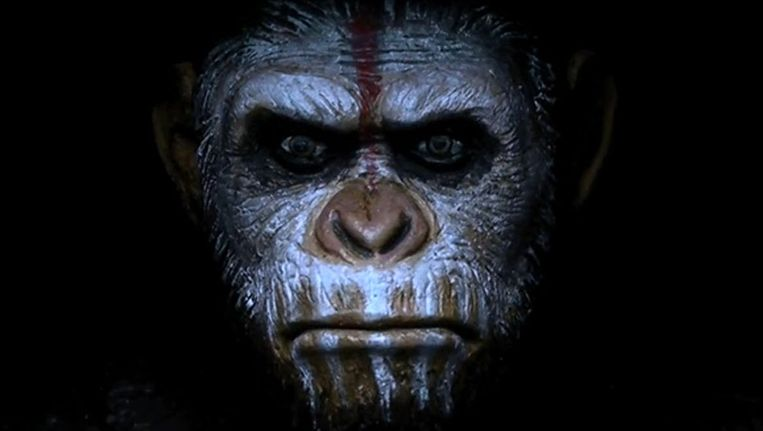 Ceasar in Dawn of the Planet of the Apes. Beeld Filmstill