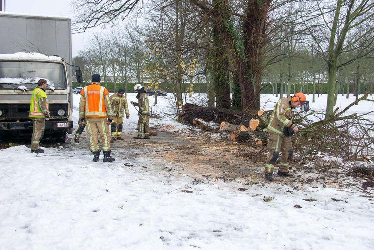 Heel wat bomen in recreatiepark De Ster sneuvelden onder de dikke laag sneeuw.