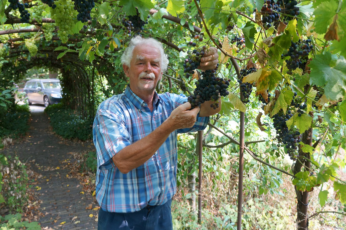 Henk Takken rekent op een prima oogst dit jaar