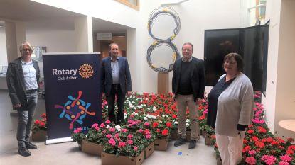 Rotary schenkt 500 bloempotten aan rusthuizen Aalter en Ursel