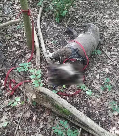 Stel vindt karkas van achtergelaten hond in bosjes van Rijswijks park: 'Een levende zee van maden'