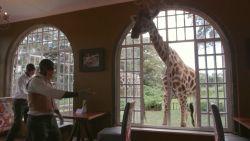 Giraffenhotel stelt haar hotel open voor buurtbewoners