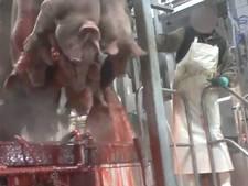 'Varkensbeulen krijgen in Nederland geen kans'