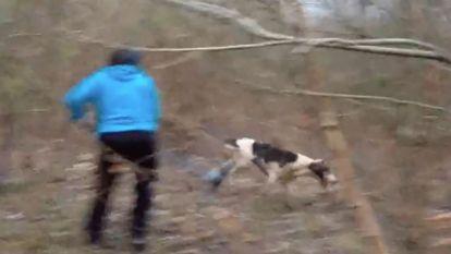 Jagers en hun honden richten ravage aan in kattenasiel