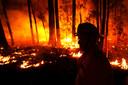 Australië wordt al wekenlang geteisterd door enorme bosbranden.