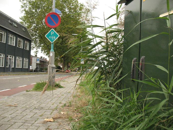 Foto ter illustratie: hoog opkomend onkruid, elders in Almelo:  langs de Sluiskade Zuidzijde.