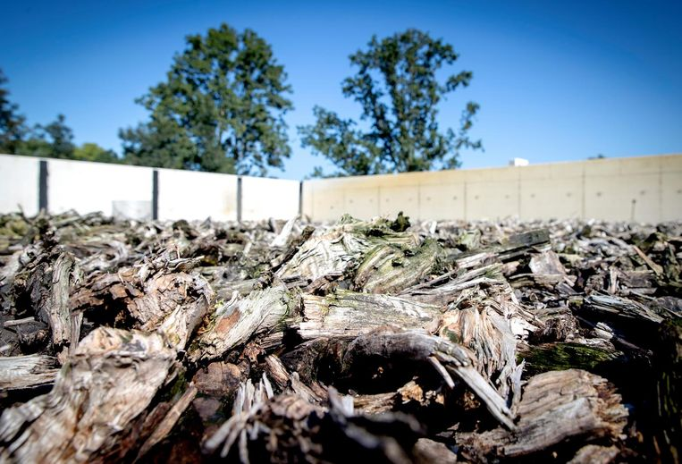 Afval van champignonkweek zogenaamde Champost wordt bij de biomassafabriek Upcycling Gemert omgezet in brandstof. Beeld anp
