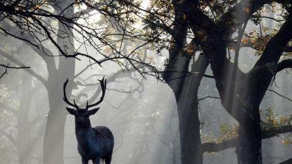 Bijziende jager ziet buurvrouw aan voor hert en schiet haar dood