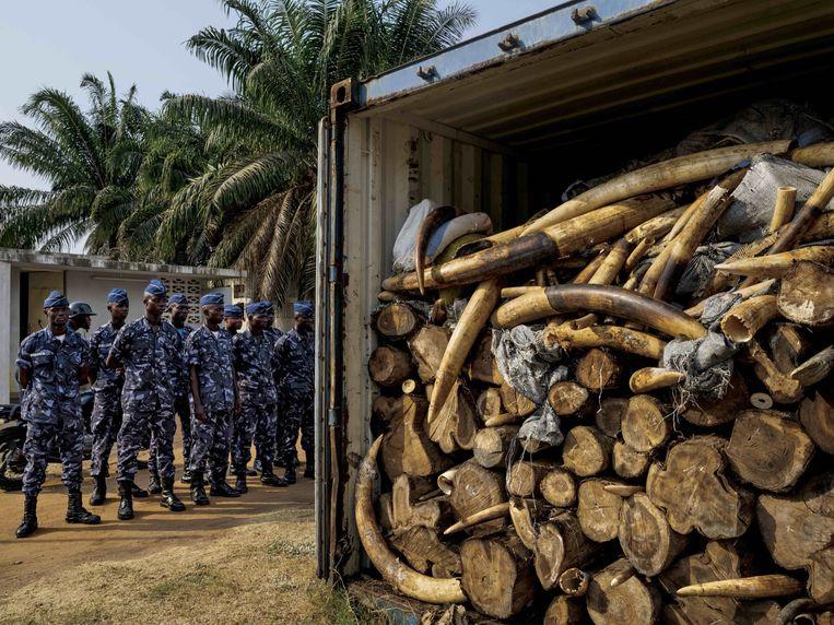Container met 4 ton ivoor, geconfisceerd in Togo. Beeld Brent Stirton