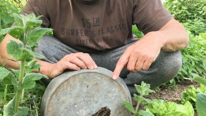 """Er groeit culinair 'zwart goud' in de tuin van Marc de Bel: """"Ik ben zo gelukkig als een kleuter bij wie sinterklaas is geweest"""""""