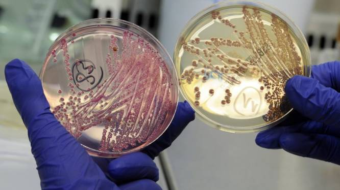 EHEC-besmettingen nemen af