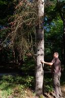 Boswachter Martijn Bergen controleert welke invloed de droogte op de bomen in bos Birkhoven heeft gehad.