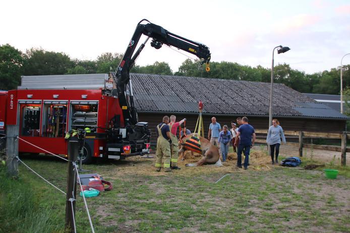 Brandweerlieden waren donderdag bezig het paard te redden.