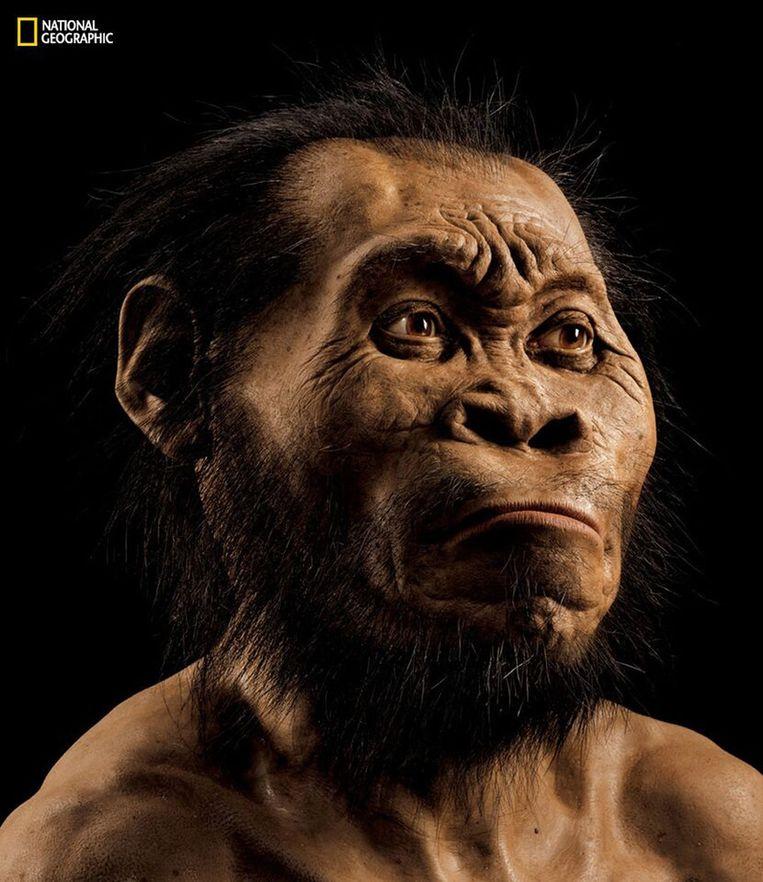 Reconstructie van de Homo naledia, de oudste mensachtige Beeld AP
