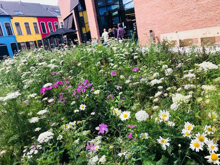 Extreem Groen wil niet-functioneel gras vervangen door wilde bloemenperken WG03