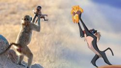 Betrapt! Baviaan imiteert iconische scène uit 'De Leeuwenkoning'