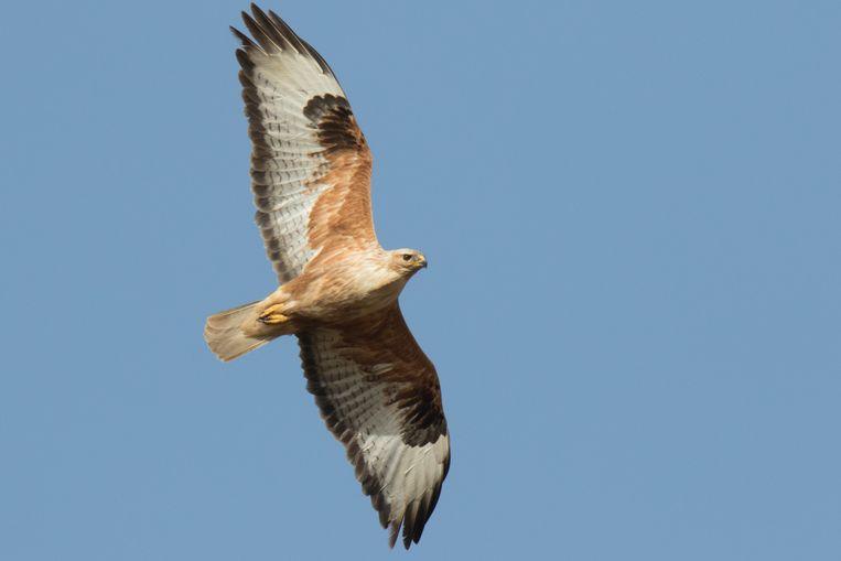 Van vogels wordt de sterfte op autowegen helemaal niet bijgehouden. Beeld Getty Images