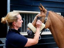'Pure dierenmishandeling!', felle kritiek op paardenmake-up van Denise uit Babyloniënbroek