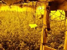 Politie vindt kwekerij met 767 wietplanten aan het Tielse Groenlandsstraatje en houdt verdachte aan