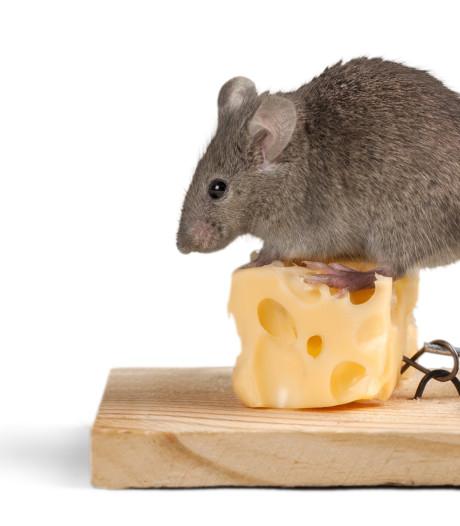 Als de muis in huis is...dit zijn de beste muizenvallen