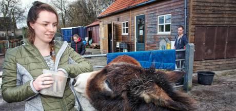 Crowdfunding moet schade voor kinderboerderij Oosterhout beperken na diefstal kluis