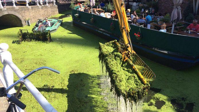 De Delftse wateren zijn ontdaan van kroos.