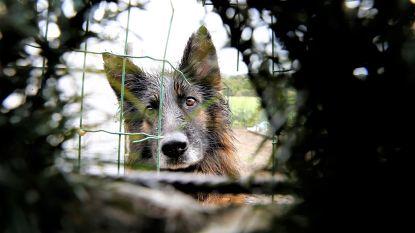 """Eigenaars verwaarloosde hond Fifi moeten voor rechter verschijnen: """"Een dierwaardig bestaan is meer dan eten en drinken alleen"""""""