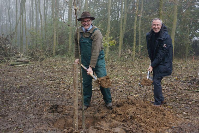 Daniel Adrians en Ronny Herremans planten de Lindeboom.