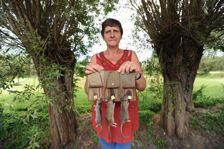In anderhalf jaar tijd liepen al 200 ratten in de vallen van Carina Van Doren.