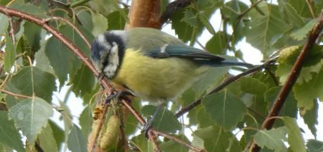 Hilvarenbeek: vogelnestkastje hangen in de strijd tegen de eikenprocessierups