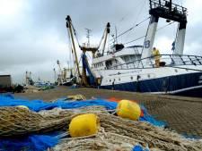 Onderzoek naar aanlandplicht vissers: het merendeel van de bijvangst sterft