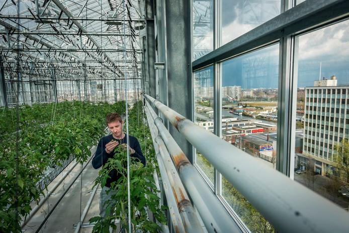 'Verticaal boeren'. Hip, maar op de oude Philipsfabriek niet rendabel.