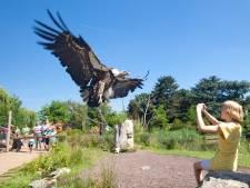 Wegvliegende vogels: bewuste ontsnapping of gewoon pech?