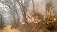 """Regen in delen Australië waar natuurbranden woeden: """"Een kerstwonder"""""""