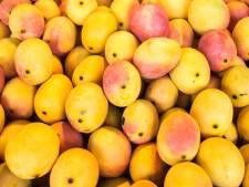 Douane vindt 550 kilo cocaïne tussen mango's