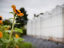 Leuk, zo'n nominatie voor Gelderse prijs, maar tuinbouwproject 'heeft Maasdriel nog niets gebracht'