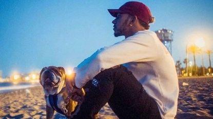 """Hond Lewis Hamilton eet alleen nog maar veganistisch: """"Hij is er blij mee"""""""