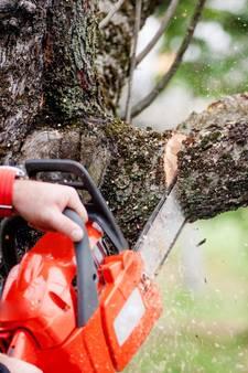 Grote twijfels over 'zieke' gekapte bomen in Waalre